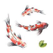 Photo Three Koi fish on white background
