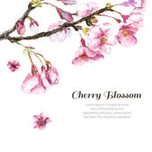 Fotografia Hand Drawn Cherry Blossoms.
