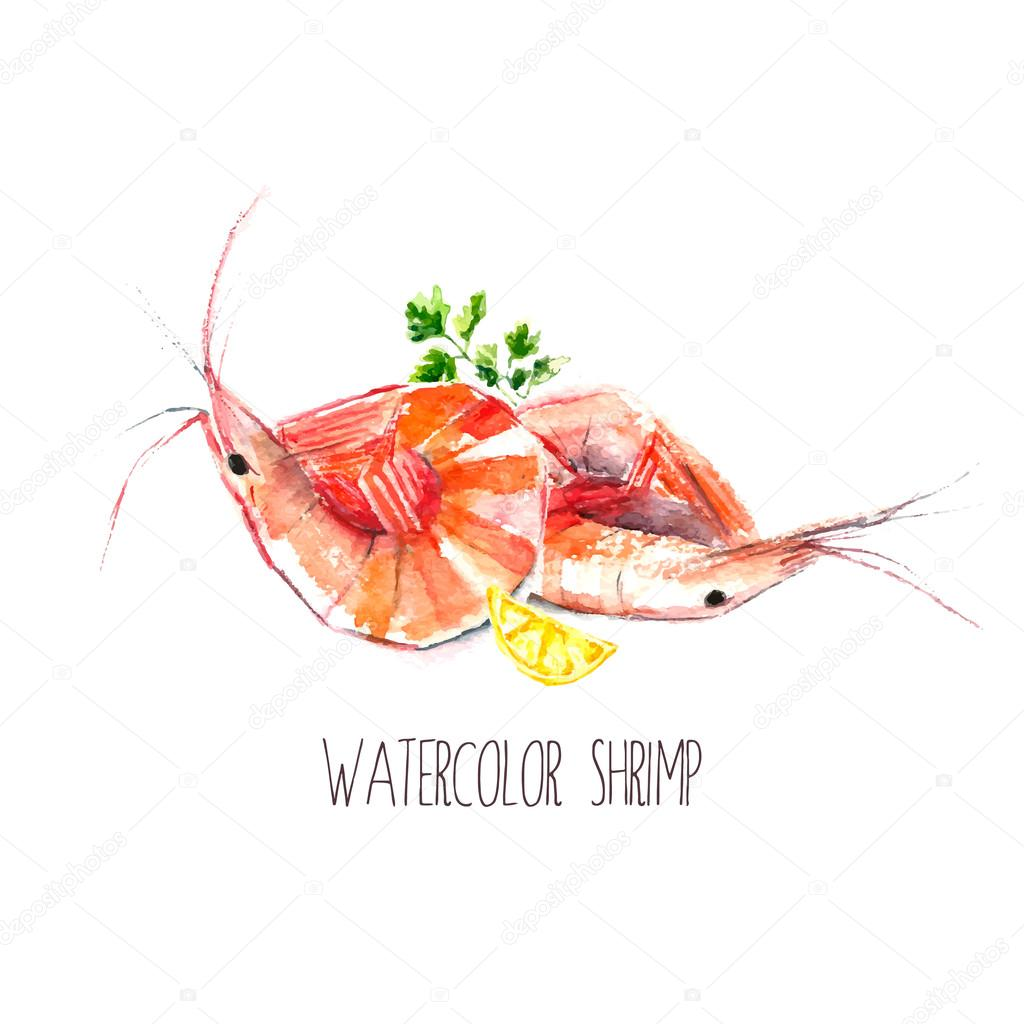 Watercolor shrimps.