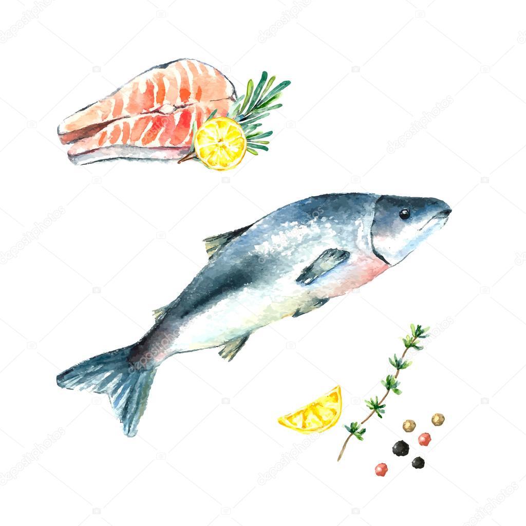 Watercolor salmon.