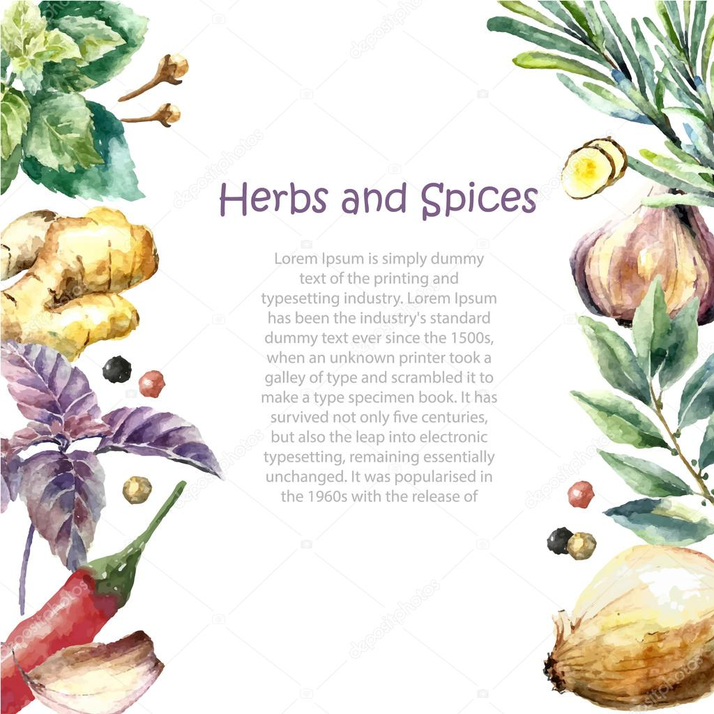 Watercolor collection of fresh herbs and spices isolated.