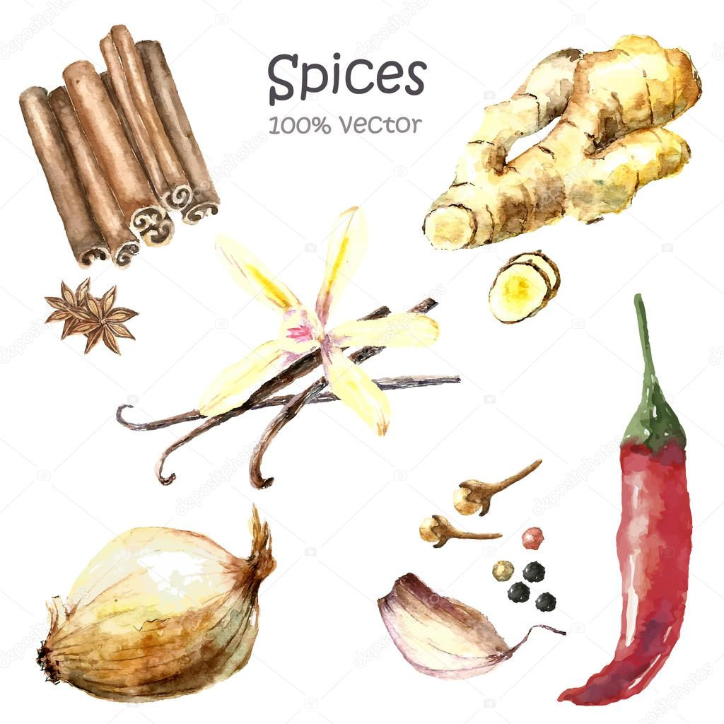 Watercolor collection spices.