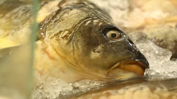 Čerstvé ryby v trhu posezení na ledě