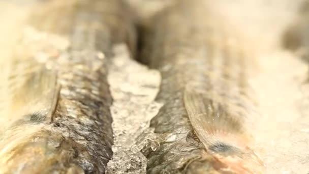 Řada ryb na LED na trhu