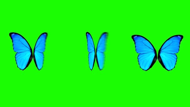 Butterfly Wings Moving in Different Speed