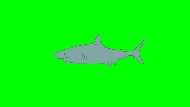 Vero e proprio fumetto squalo nuoto su uno sfondo di schermo verde