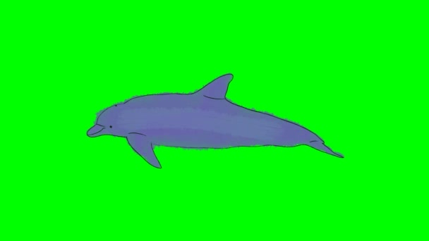 Nuoto del delfino fumetto reale su uno sfondo di schermo verde