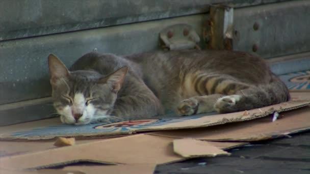 Divokých Toulavá kočka spí na karton na trhu