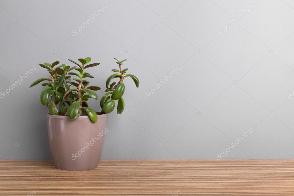 Zimmerpflanzen Sukkulenten zimmerpflanzen sukkulenten stockfoto fotofabrika 106488168