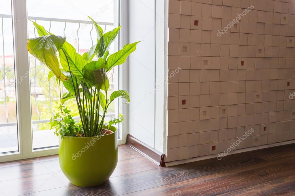 Decoratie voor op de vensterbank for Decoratie vensterbank