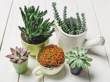 Succulents, house plants in colorful pots