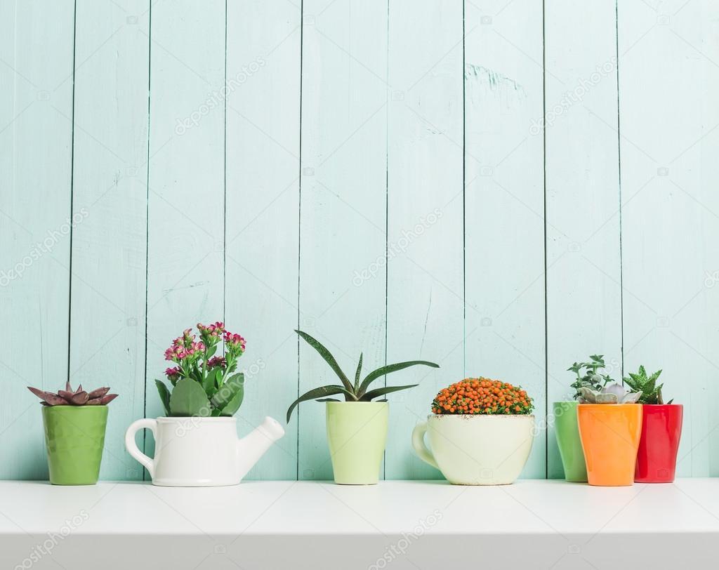 Suculentas plantas en macetas de colores fotos de stock - Macetas de colores ...