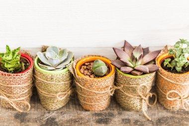 house plants in pots