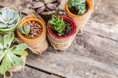 Succulents, house plants
