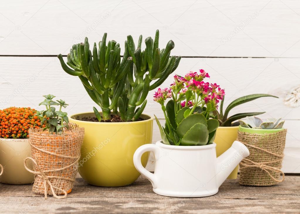 Sukkulenten Zimmerpflanzen sukkulenten zimmerpflanzen in töpfen stockfoto fotofabrika