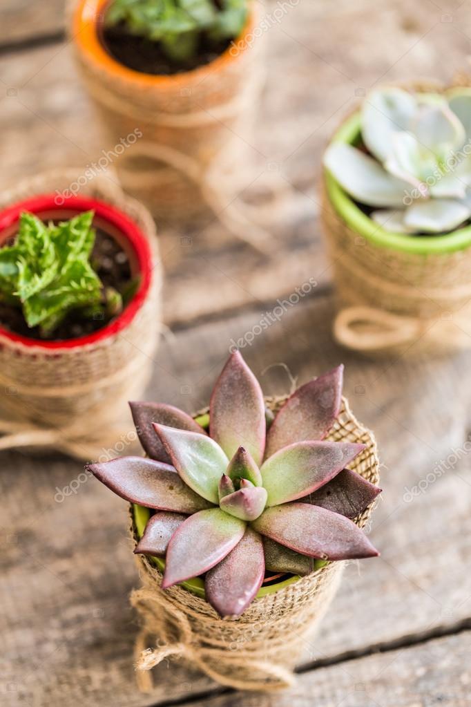 Sukkulenten Zimmerpflanzen sukkulenten zimmerpflanzen stockfoto fotofabrika 84096056