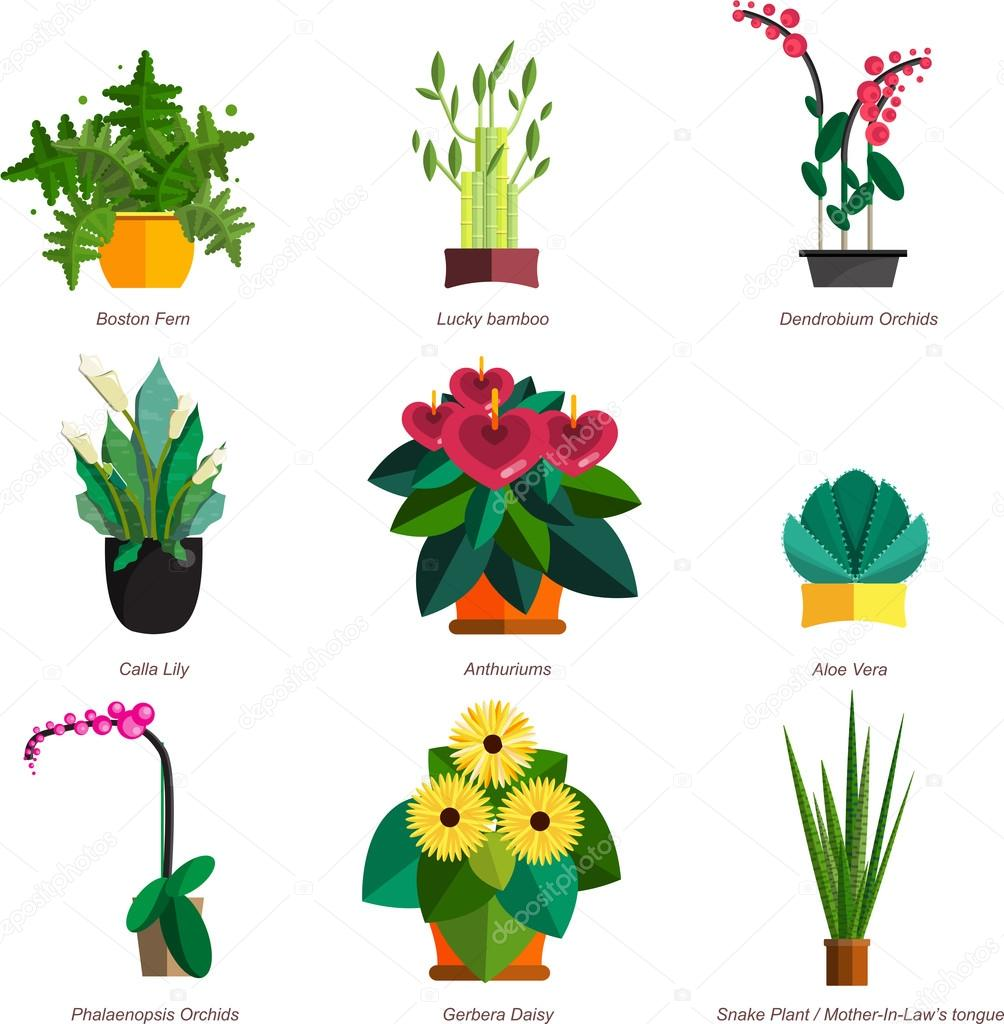 Illustration of houseplants, indoor and office plants in pot. Dracaena, fern, bamboo, spathyfyllium, orchids, Calla lily, aloe vera, gerbera, snake plant, anthuriums. Flat plants, vector icon set