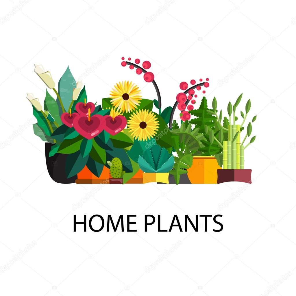 Illustration of houseplants, indoor and office plants in pot.