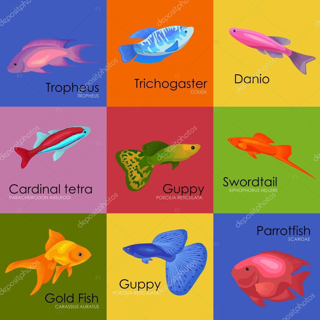 Aquarium fish vector illustration icons set isolated on white ...