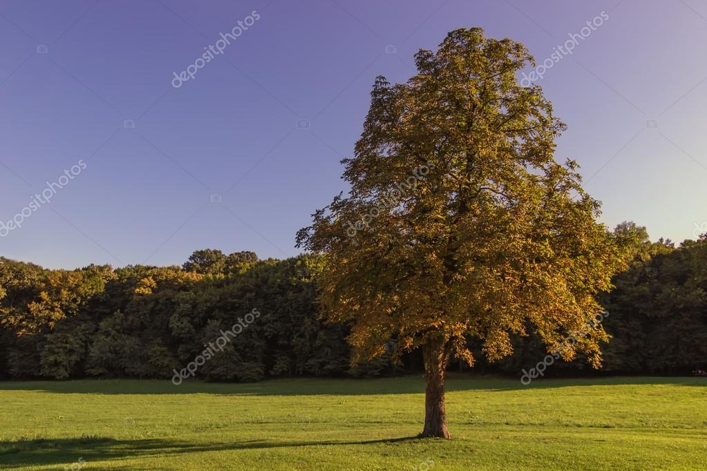 solitaire bel arbre automne paysage d 39 automne arbres commencent changer de couleur au d but. Black Bedroom Furniture Sets. Home Design Ideas