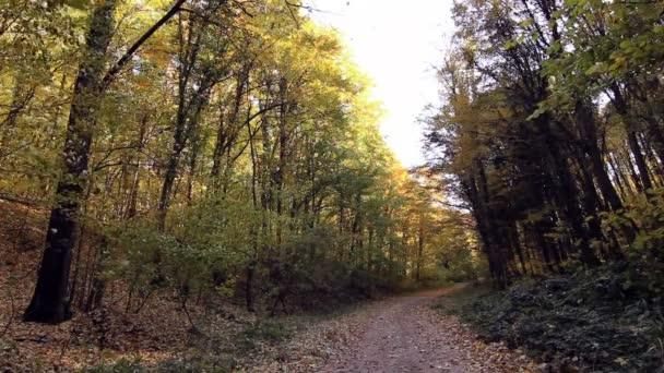 Kouzelný podzim lesní cesta v podzimním lese