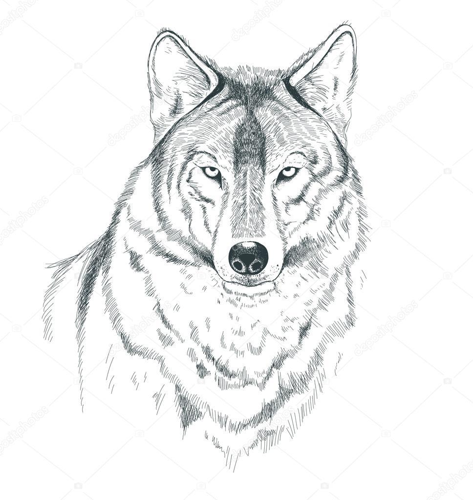 Un Dibujo De Un Lobo Hecho A Mano Archivo Imágenes Vectoriales