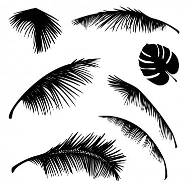 tropical palm leaves silhouette