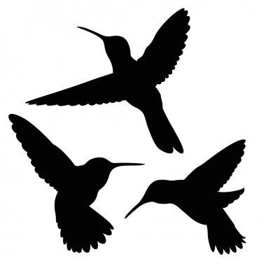 hummingbird silhouette set