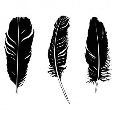 feather illustration silhouette set