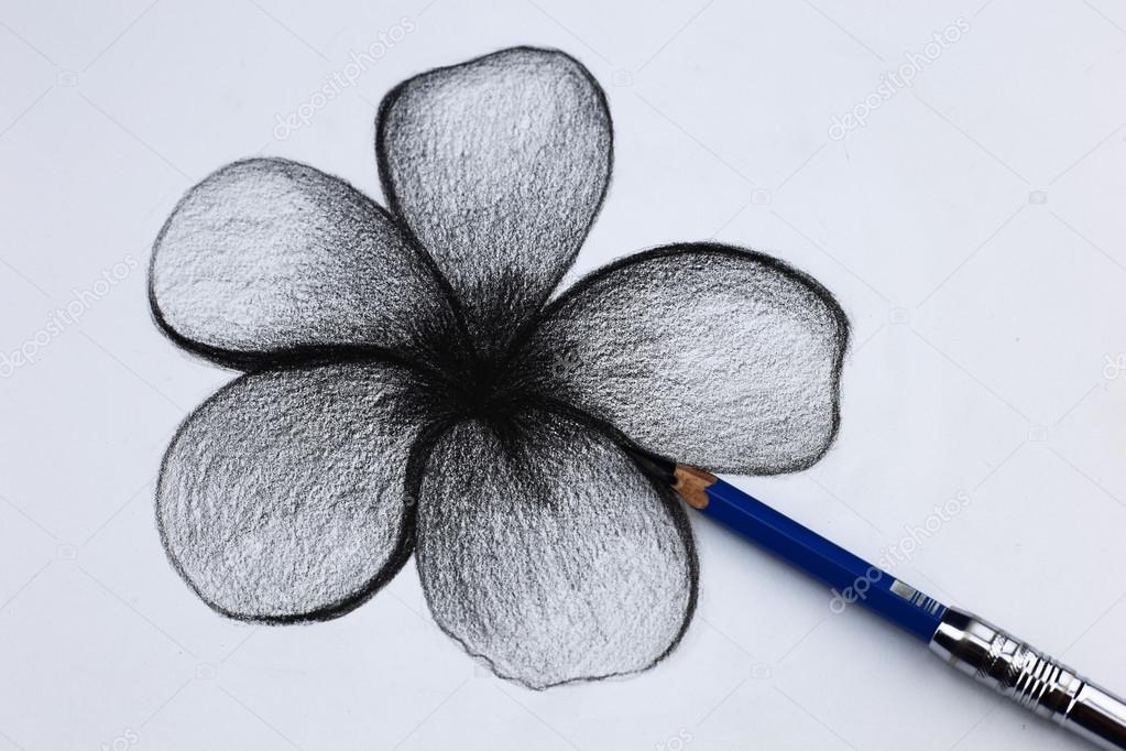 Dibujos Flores A Lapiz Lápiz De Dibujo De Flores Foto De Stock