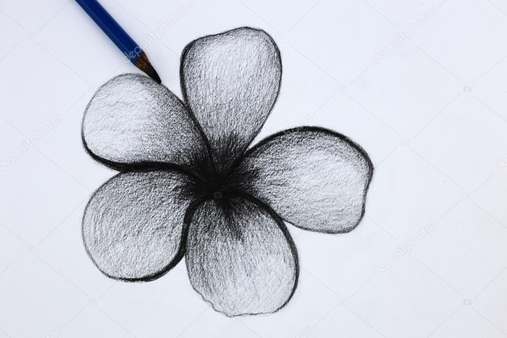 Imagenes Flores A Lapiz Lapiz De Dibujo De Flores Foto De Stock