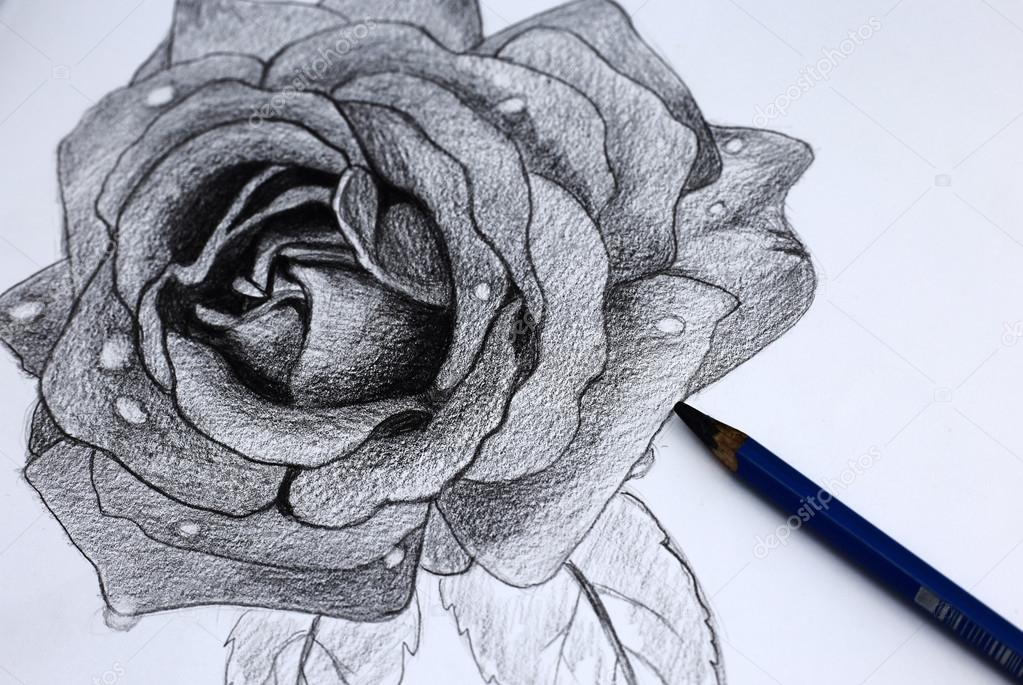 Io disegno di fiori a matita foto stock wongchai1972 for Disegni di fiori a matita