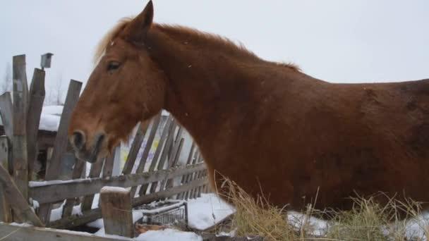 Van egy nagy piros ló a farmon.