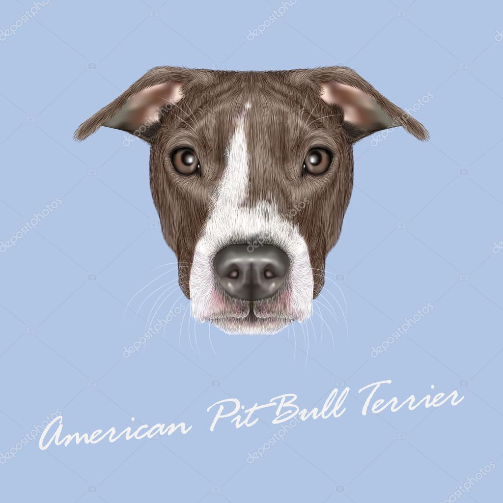 American Pit Bull Terrier Portrait