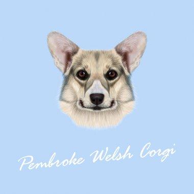 Vector illustrated portrait Pembroke Welsh Corgi Dog