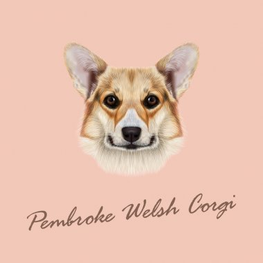 Vector illustrated portrait Pembroke Welsh Corgi Dog.