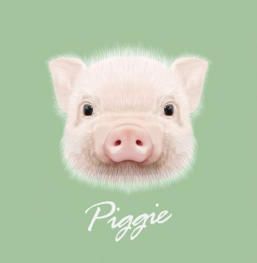 Vector illustrated portrait of farm pig.