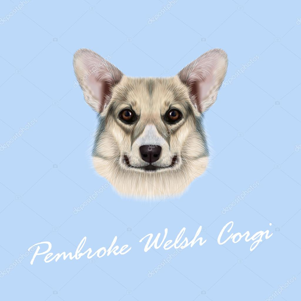 Vector illustrated portrait Pembroke Welsh Corgi Dog