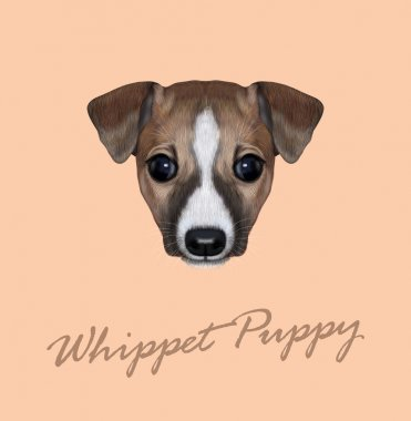 Vector Illustrated Portrait of Whippet puppy.