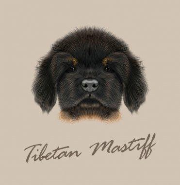 Vector Illustrated Portrait of Tibetan Mastiff puppy.