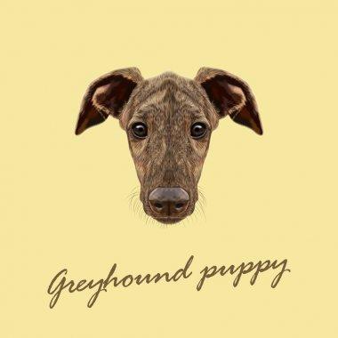 Vector Illustrated Portrait of Greyhound puppy.