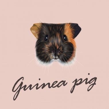 Vector Illustrated portrait of Guinea pig.