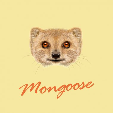 Vector Illustrated portrait of Mongoose.