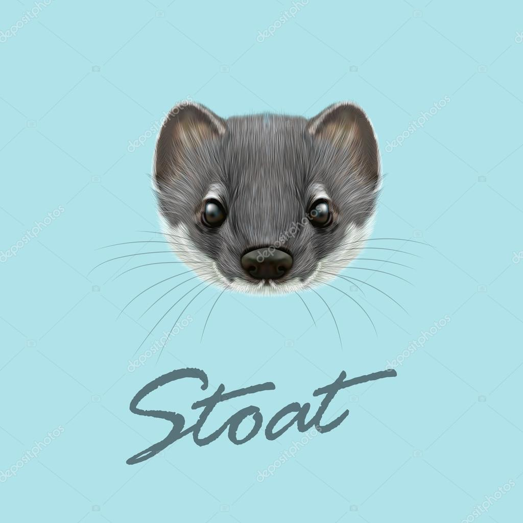 Vector Illustrated portrait of Stoat.