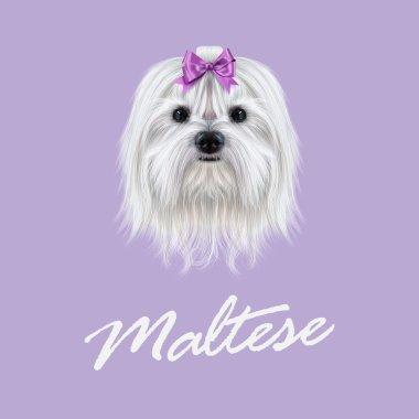 Vector Illustrated portrait of Maltese dog.