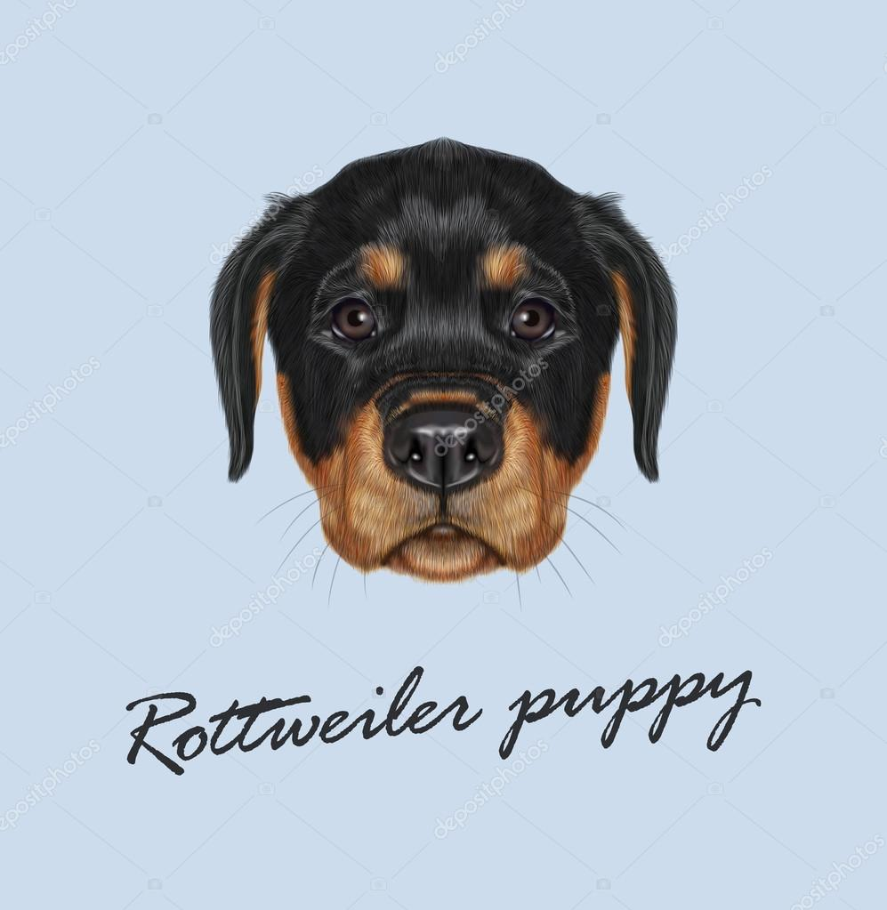 Vector Illustrated Portrait Of Rottweiler Puppy Stock Vector