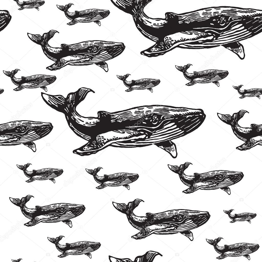 Zwart Wit Naadloze Vector Patroon Walvis Stockvector Antart
