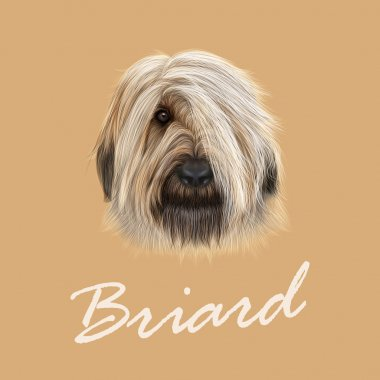 Vector Illustrated Portrait of Briard dog.
