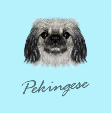 Vector Illustrated portrait of Pekingese dog