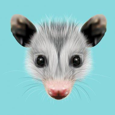 Illustrated Portrait of Opossum.